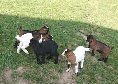 02.-kozy-miniaturowe