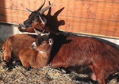 08.-kozy-miniaturowe