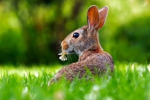 Wielkanoc iPowitanie Wiosny